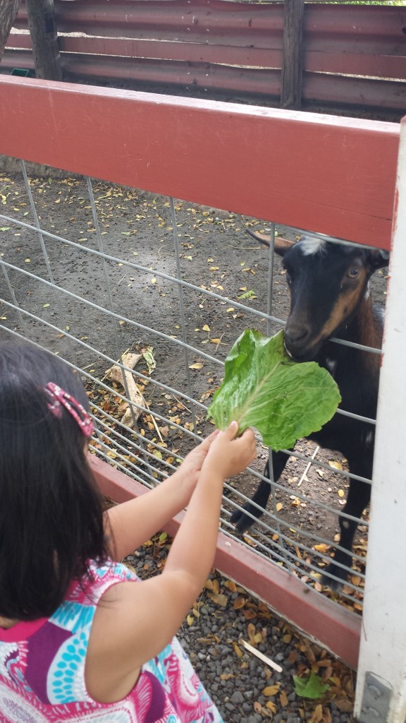 Kualoa Ranch's petting zoo
